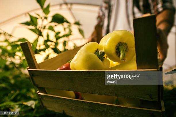 Close up of yellow bell peppers in a wooden crate.