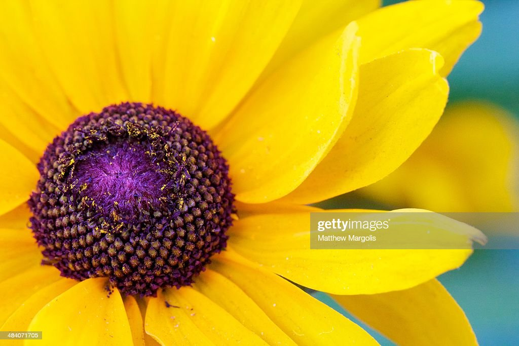 Close Up Of Yellow Flower Stock Foto Getty Images