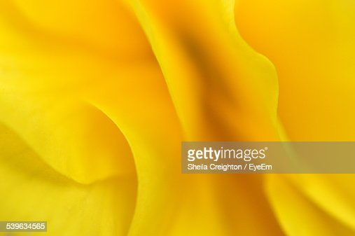 Close Up Of Yellow Flower