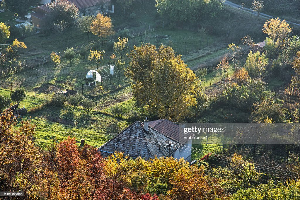 Close up photo of rural scene, seasonal natural theme : Foto de stock