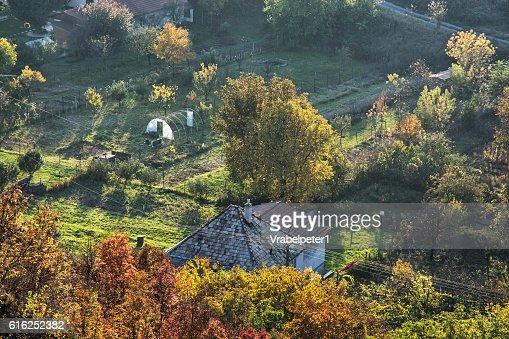 Close up photo of rural scene, seasonal natural theme : Foto de stock