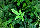 close up photograph of green color fern leaves  - plants captured  from a smart phone in an uninhabited land in Wellampitiya Sri Lanka