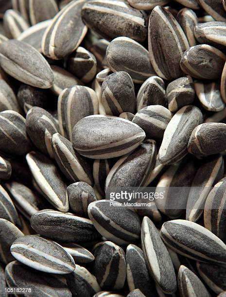 A close up photograph shows some of the seeds used in Chinese Artist Ai Weiwei's Unilever Installation 'Sunflower Seeds' on show at The Tate Modern...