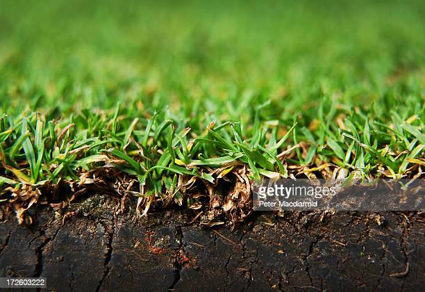 A close up photograph shows the grass on Centre Court at the Wimbledon Lawn Tennis Championships on July 2 2013 in London England