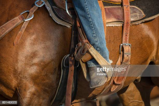 Close up shot of a beautiful horse and its rider seated on the saddle.