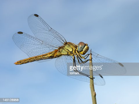Close up shot of dragonfly landing on top of a stick