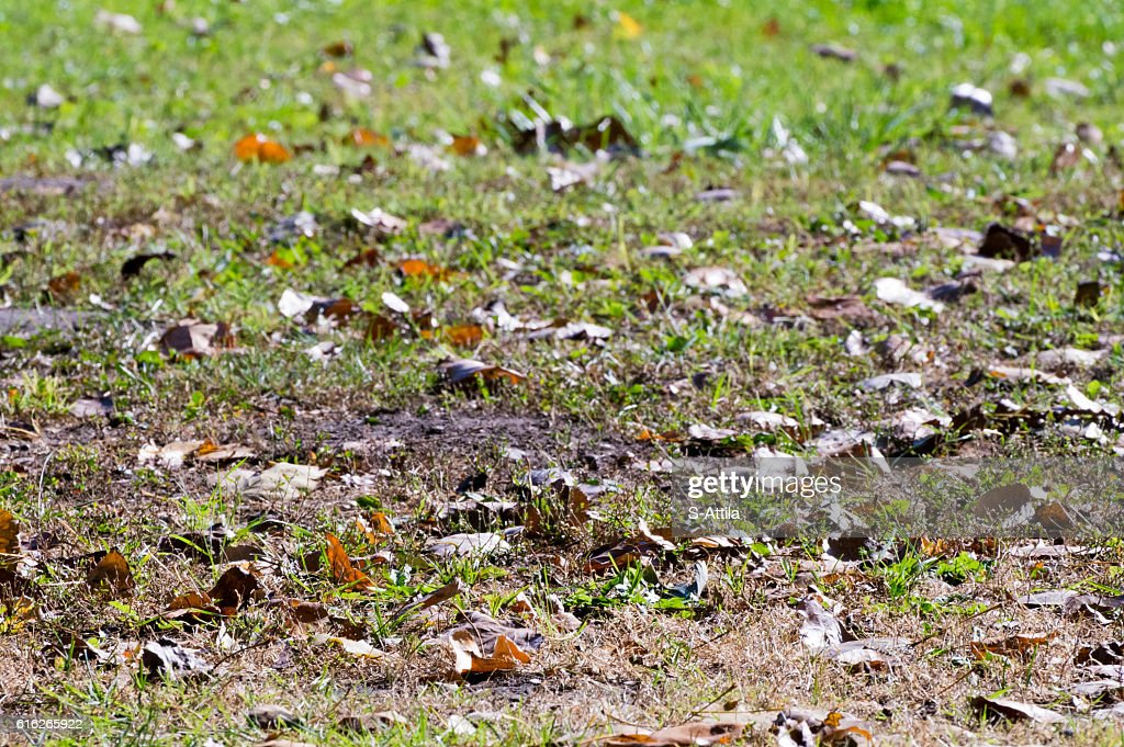 Close up shot of yellow leaves and grass : Stock Photo