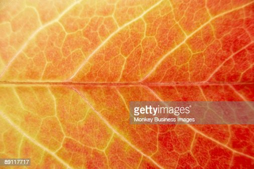 Close Up Showing Detail Of Autumn Leaf : Stock-Foto