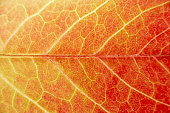 Close Up Showing Detail Of Autumn Leaf