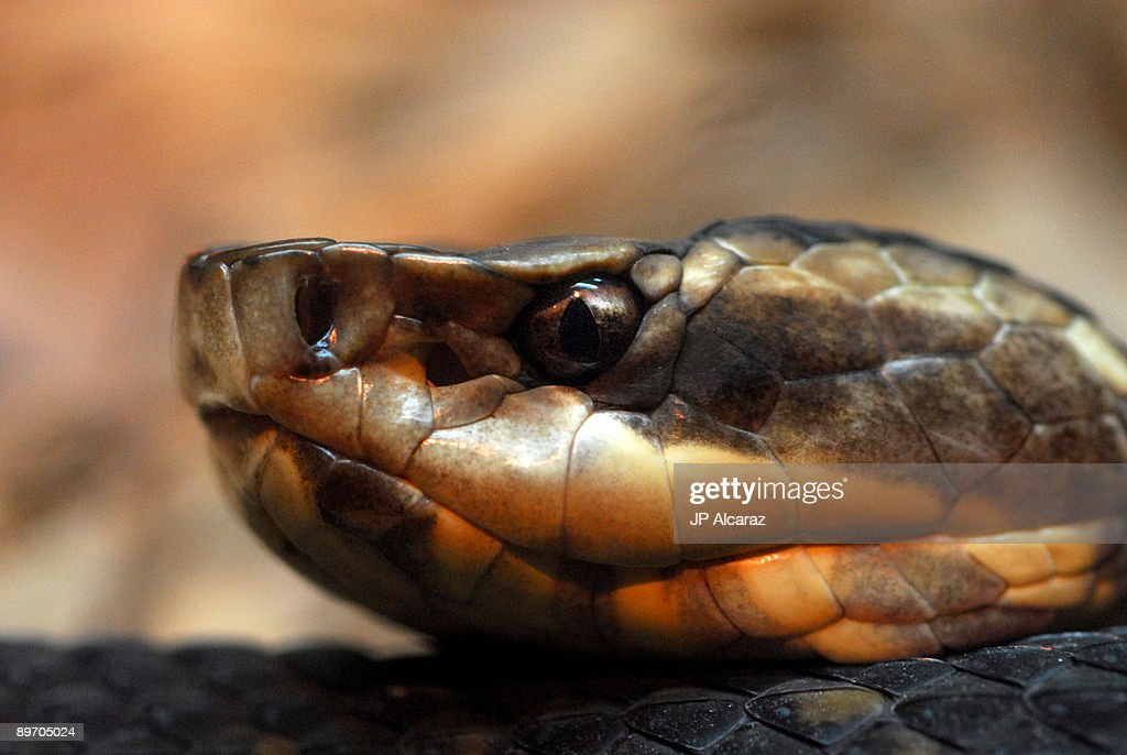 Close up, side profile of a snake : Stock Photo