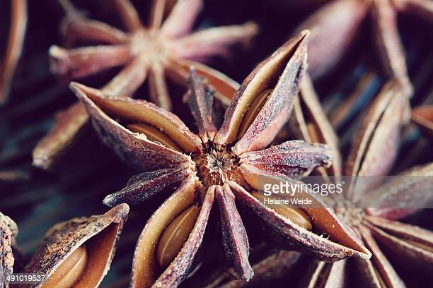Close up star anise, Illicium verum