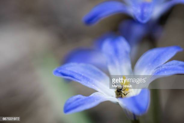 Close up to a Blue Wildflower