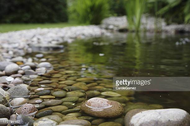 Close up view of a pond in a garden with rocks