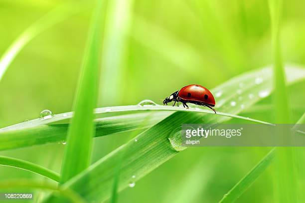 Close up view of ladybug on blade of grass