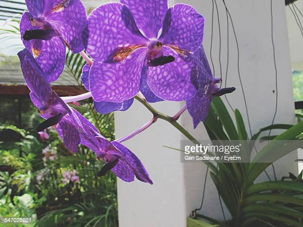 Close Up View Of Purple Orchid