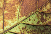 Drop, Light - Natural Phenomenon, Liquid, Plant, Reflection