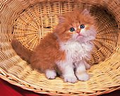 Persian cat; is one of the oldest breeds of cat.