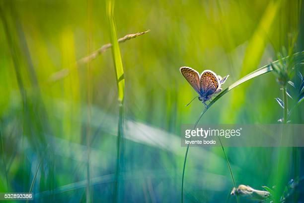 Closeup butterfly on grass