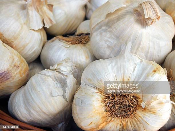 Closeup detail of garlic bulbs in a bowl taken on August 22 2011