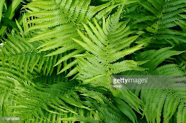 Close-up detailed view of green fern plant fronds