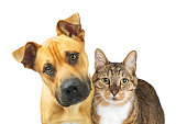 Closeup photo of a brown and white tabby cat  and cute dog together looking at the camera over white with copy space