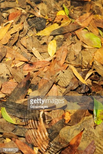 Close-up dry leaves : Stock Photo