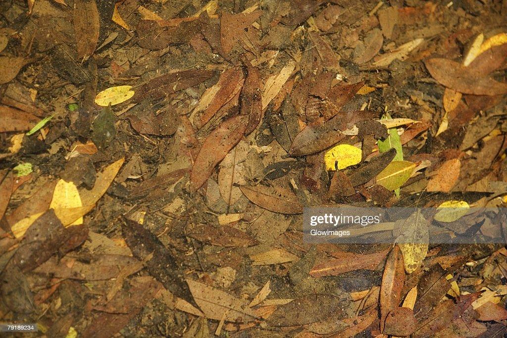 Close-up dry leaves : Foto de stock