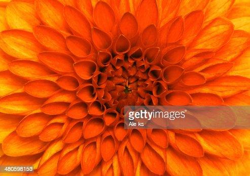 closeup flower : Stock Photo