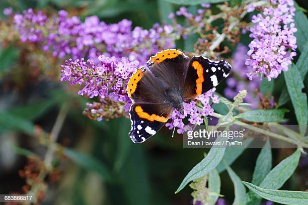 Close-Up High Angle View Of Butterfly On Flowers