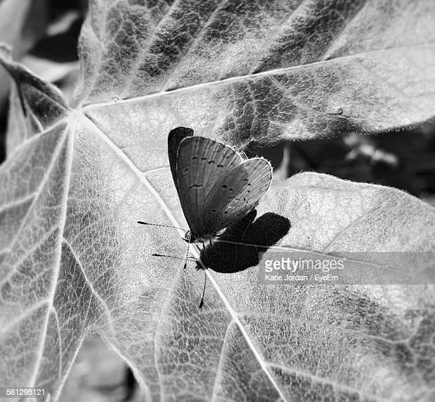 Close-Up High Angle View Of Butterfly On Leaf