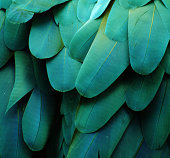 Macro photograph of the feathers of a Blue-and-gold Macaw (Ara ararauna)