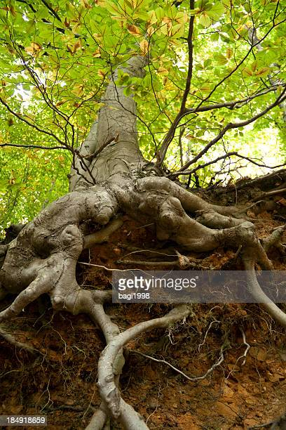 Close-up low angle view of a tree's protruding roots