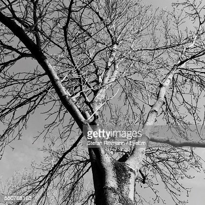 Close-Up Low Angle View Of Bare Tree Against Clear Sky