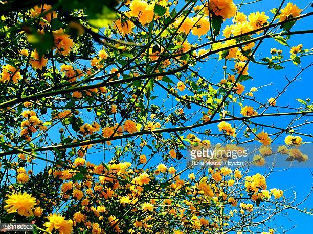 Close-Up Low Angle View Of Flower Tree Against Sky