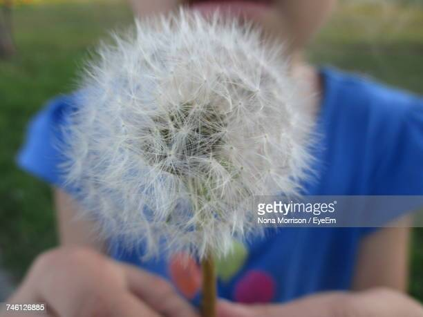 Close-Up Midsection Of Girl Holding Dandelion Seed At Playground