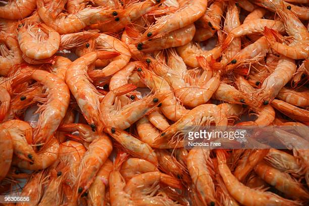 Closeup of a batch of fresh prawns