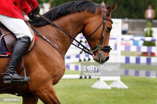 A close-up of a beautiful show jumping horse