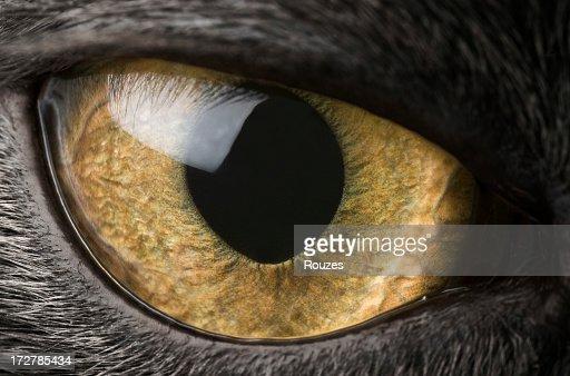 A close-up of a black cat's eye