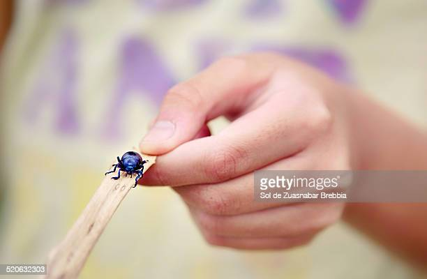 Closeup of a bug on a stick in the hand of a child