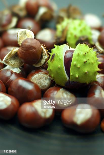 A close-up of a bunch of chestnuts