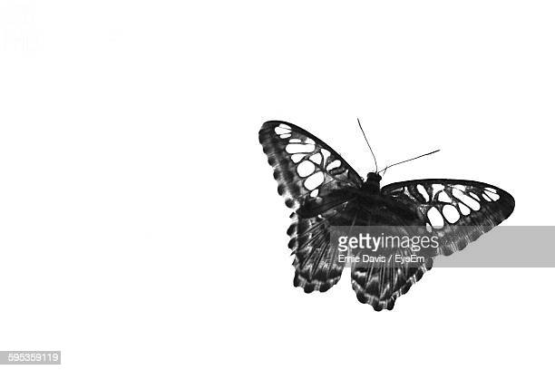 Close-Up Of A Butterfly Over White Background