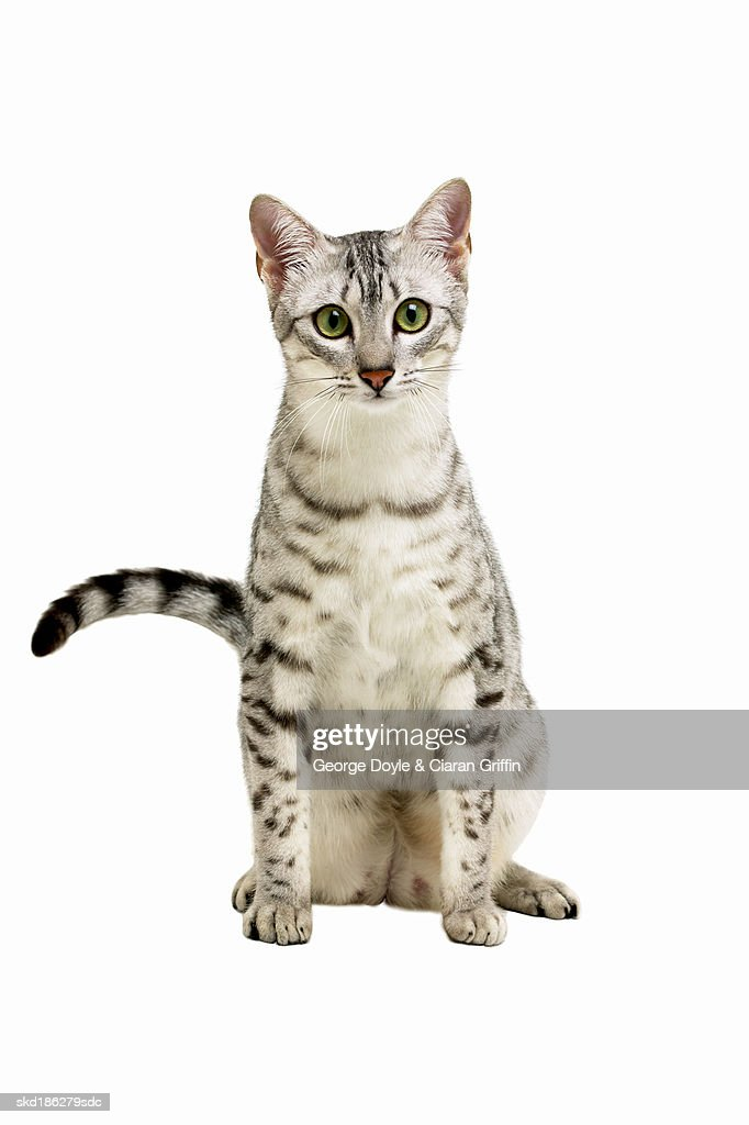 Close-up of a cat : Stock Photo