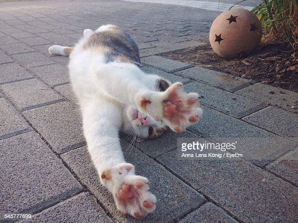 Close-Up Of A Cat Stretching Outdoors
