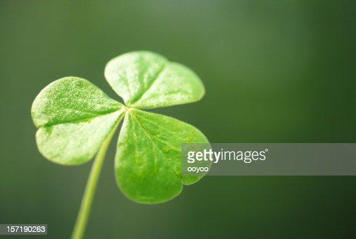 Close-up of a clover