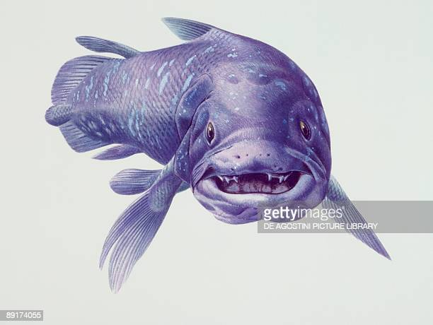Closeup of a coelacanth