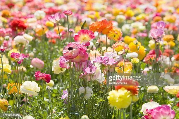 Champ de fleurs de printemps