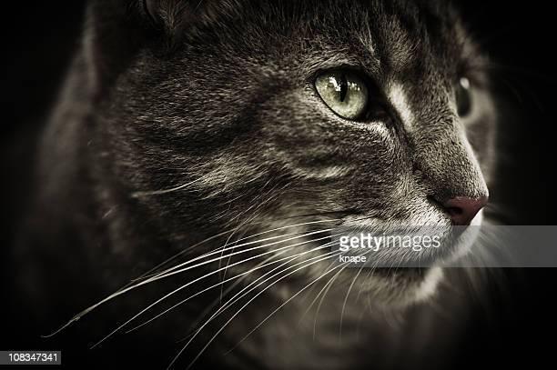 Close-up de um gato engraçado