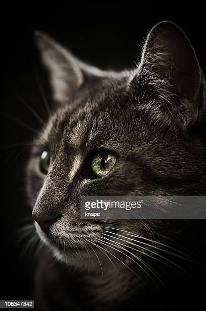 Close-up of a cute cat