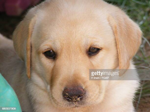 Close-up of a cute puppy