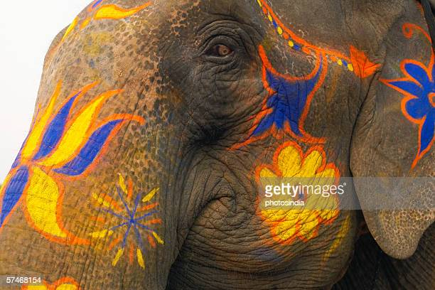 Close-up of a decorated elephant